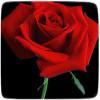 Что полезного можно сделать из лепестков роз
