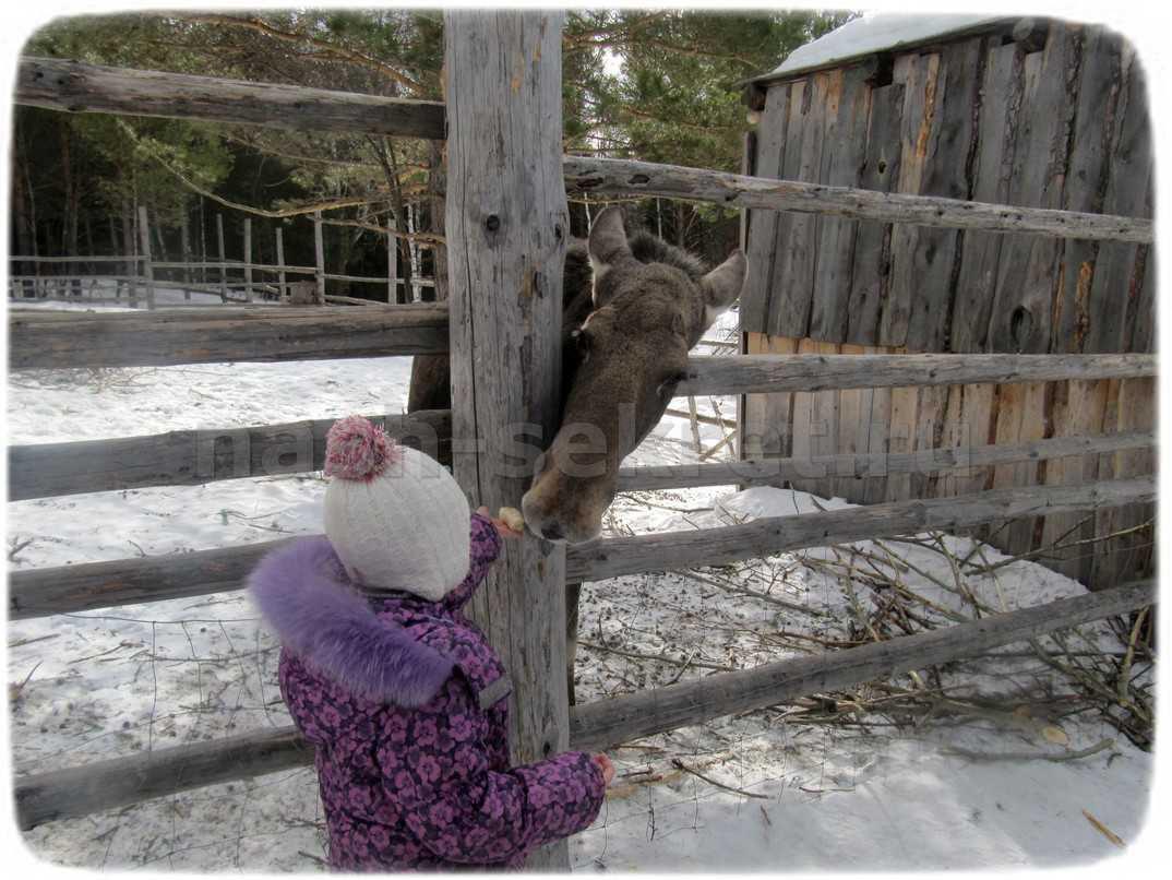 лось и девочка
