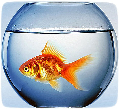 фурацилин для аквариума