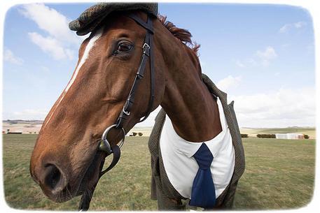 конь в пальто откуда пошло