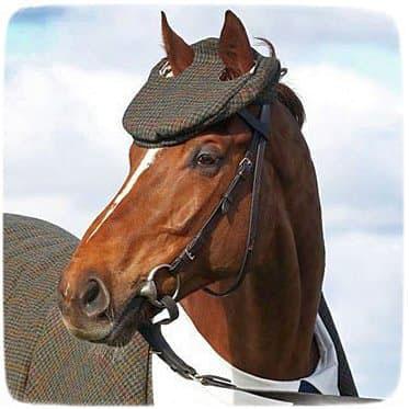 конь в пальто и кепке