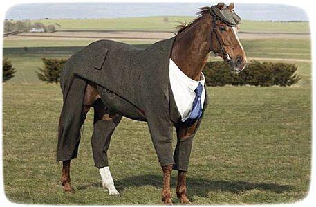 конь в одежде
