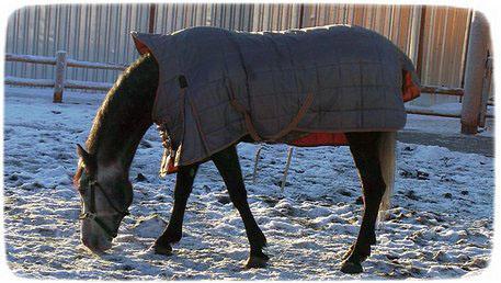 конь в накидке