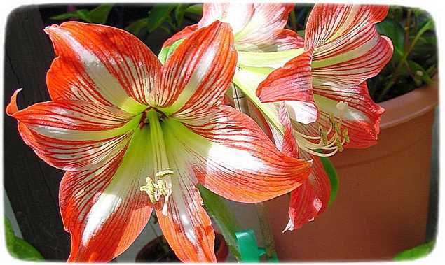 натуральные удобрения для комнатных растений бабушкины рецепты