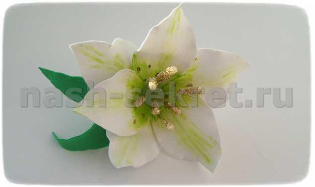 лилия из фома
