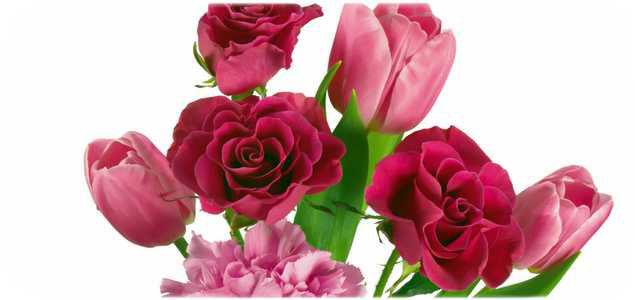 Розы тюльпаны гвоздики