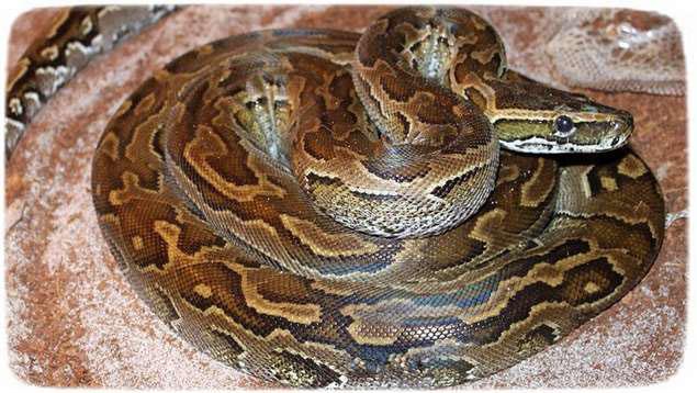 Самые опасные змеи в мире фото