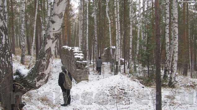 стена посреди леса