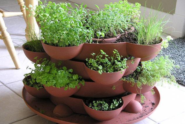 Пряные травы на подоконнике выращивание