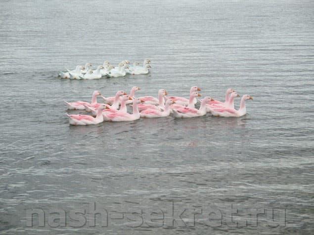 """""""Розовый фламинго"""" с Нурали"""