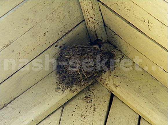 жилище птиц и насекомых