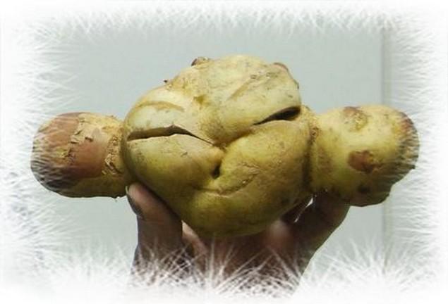 Чебурашка-картошка