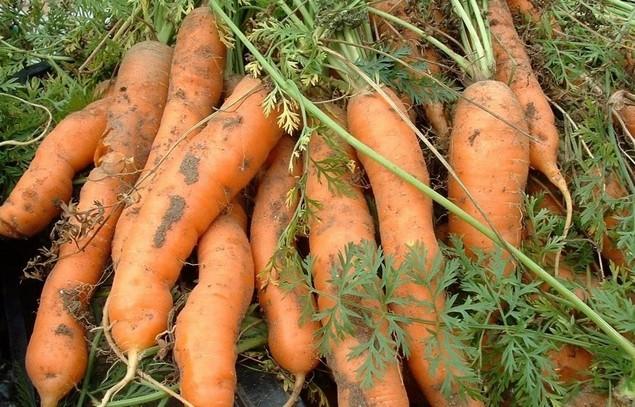 Дети собирают урожай