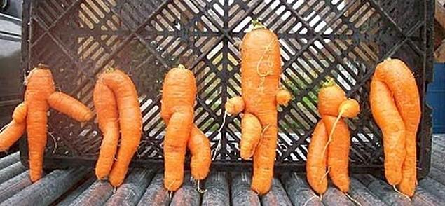 Двойные моркови