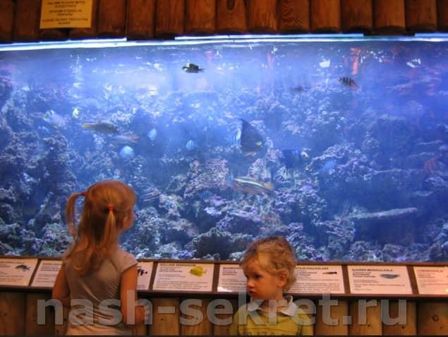 Наблюдать за акулами